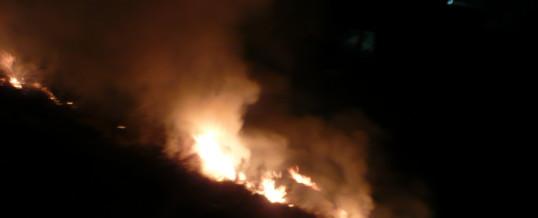 Rasenbrand